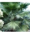 Dárkové balení palem a palmiček včetně substrátu a hnojiva