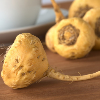 Maka - Peruánský ženšen - Lepidium Meyenii - Osiva - 5ks