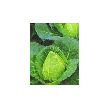 Zelí bílé - velmi rané - semena zelí - Brassica oleracea - 0,8 gr