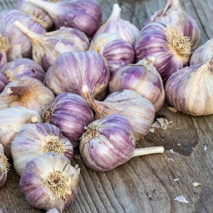 Sadbový česnek Topaz - Allium sativum - paličák - cibuloviny česneku - 5ks