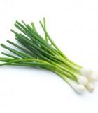 Jarní cibulka