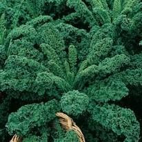 Kadeřávek zelený - semena Kadeřávku - osivo 0,9 gr